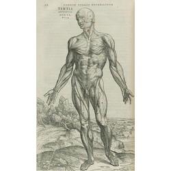 Le statut du corps humain