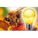 L'intelligence des abeilles
