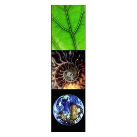 Comment enseigner les sciences de la vie et de la terre