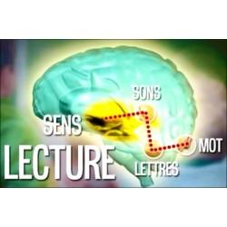 Le cerveau qui lit et qui écrit