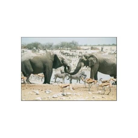 Coopération, solidarité et altruisme animales