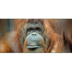 La révolution primatologique