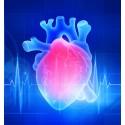 Les biothérapies cardiaques