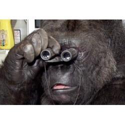 Représentations perceptives : une brique cognitive commune au singe et à l'homme ?