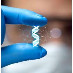 L'information génétique : une information particulière ?