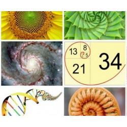 La vie et l'oeuvre mathématique de Fibonacci