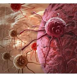 Le feu par le feu : les approches actuelles de thérapies géniques et cellulaires anticancéreuses ?