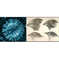 Du rôle des virus dans l'Evolution : une vision élargie du néodarwinisme