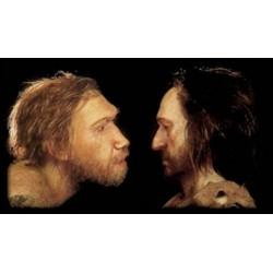 NÉandertal et Homo sapiens : pourquoi et comment l'un a pris le dessus sur l'autre ?