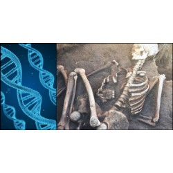 Voyager dans le temps avec l'ADN fossile