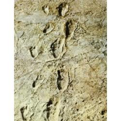 Les racines préhistoriques de l'Odyssée de l'Humanité