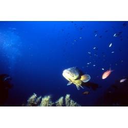 La faune mystérieuse des grandes profondeurs marines