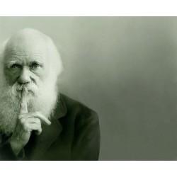 Darwin et les sociétés humaines
