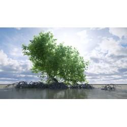 La mangrove, un milieu exceptionnel