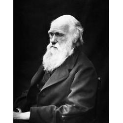 Bergson : Bergson et Darwin