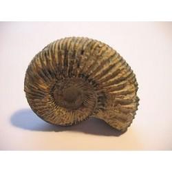 La formation des fossiles