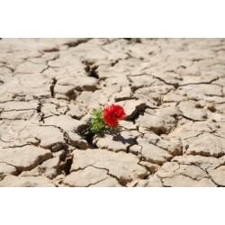 Polycrise de civilisation et biodiversité : l'homnisation inachevée