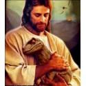 Sciences du vivant versus créationnisme